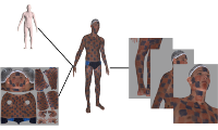 From Scans to Models: Registration of 3D Human Shapes Exploiting Texture Information